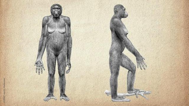 primeros-homínidos