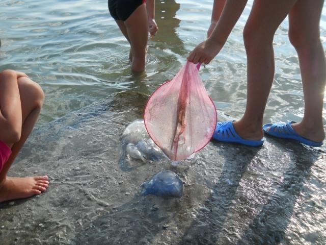 medusas-gigantes